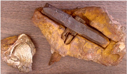 140 Million Year Old Hammer