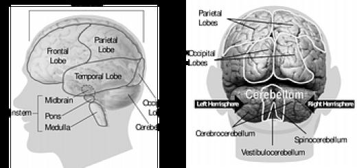 brain-148131__180[1]